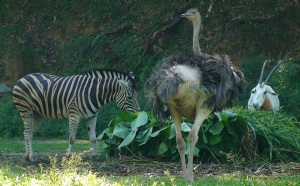 zebra, ostrich and antelope at the Savannah walk