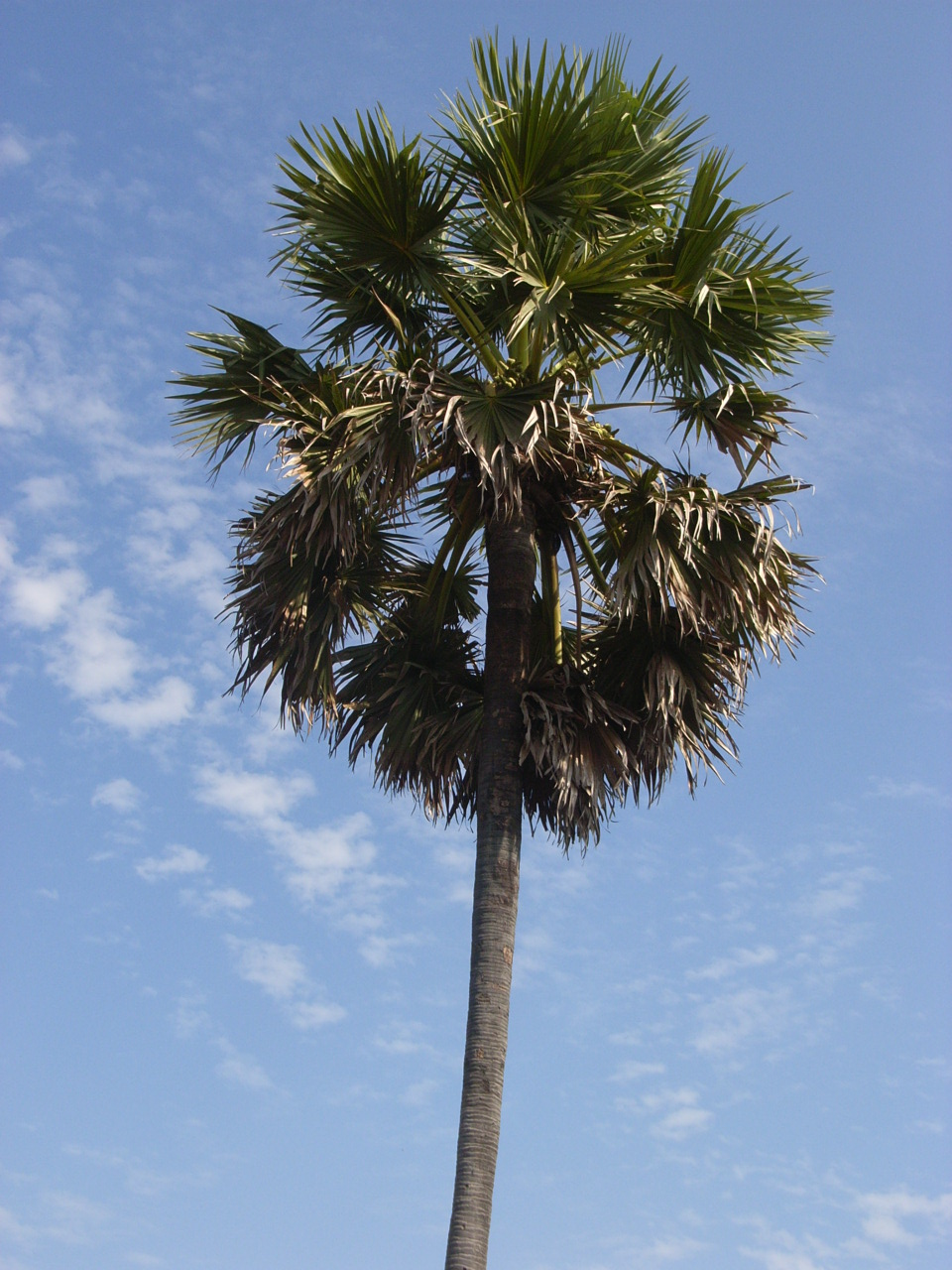 Why are Palm Trees Beautiful?  Aeshah Adlina's Weblog