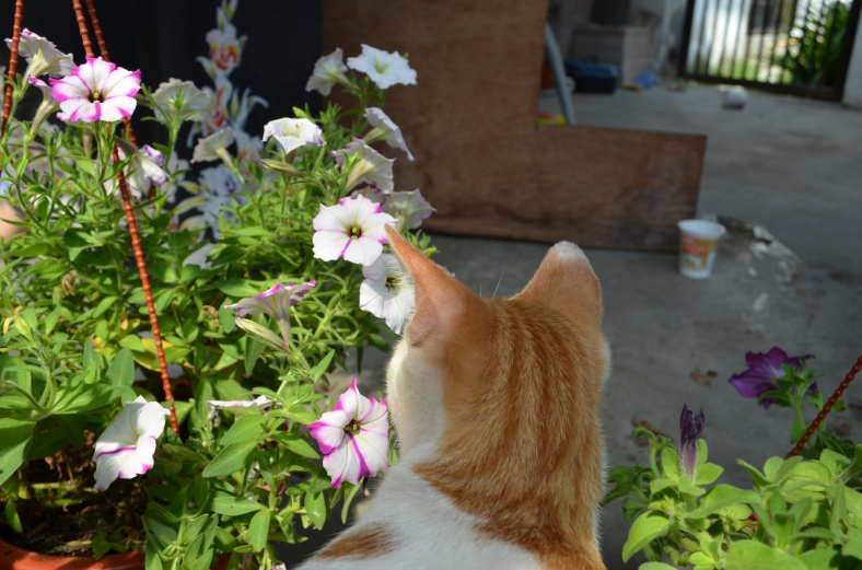 Clover and my Petunias.