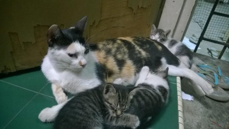 A happy family <3